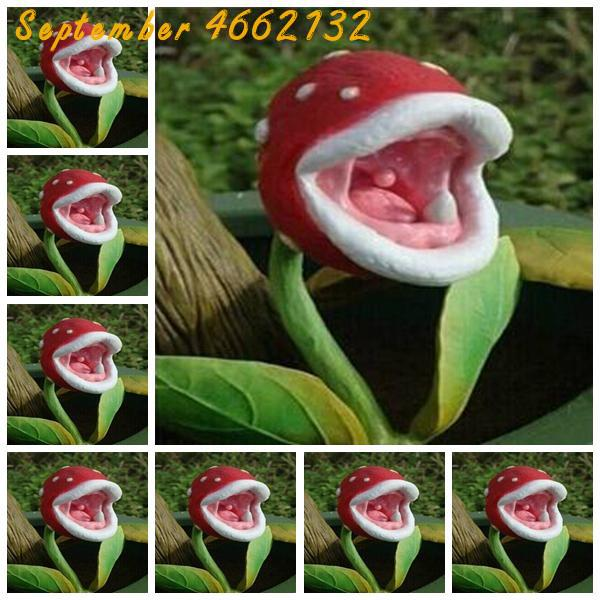 100 Pcs Insect Catching Succulent Plant Enchantress Carnivorous Bonsai Carnivorous Plants Giant Clip Venus Flytrap Plant