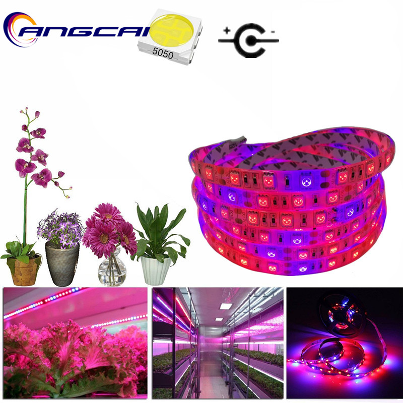 Grow Light LED Strip Lamp 12V 1M 60LED 5M 300LED SMD 5050 Red Blue For Indoor Plants Flower Plant Greenhouse Aquarium Hydroponic