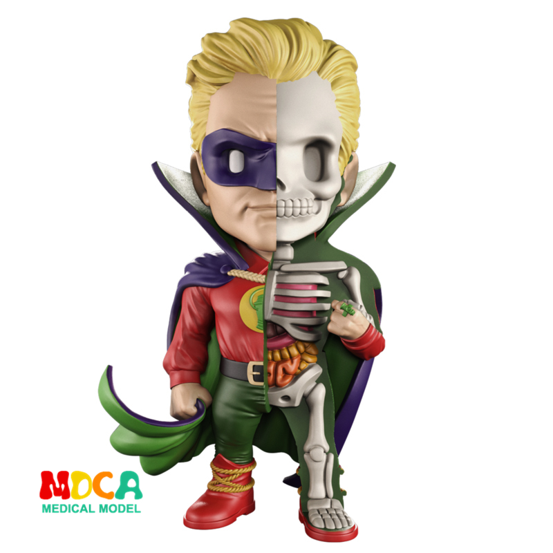 Green Lantern 4D XXRAY master Mighty Jaxx Jason Freeny anatomy Cartoon ornament robin hood 4d xxray master mighty jaxx jason freeny anatomy cartoon ornament