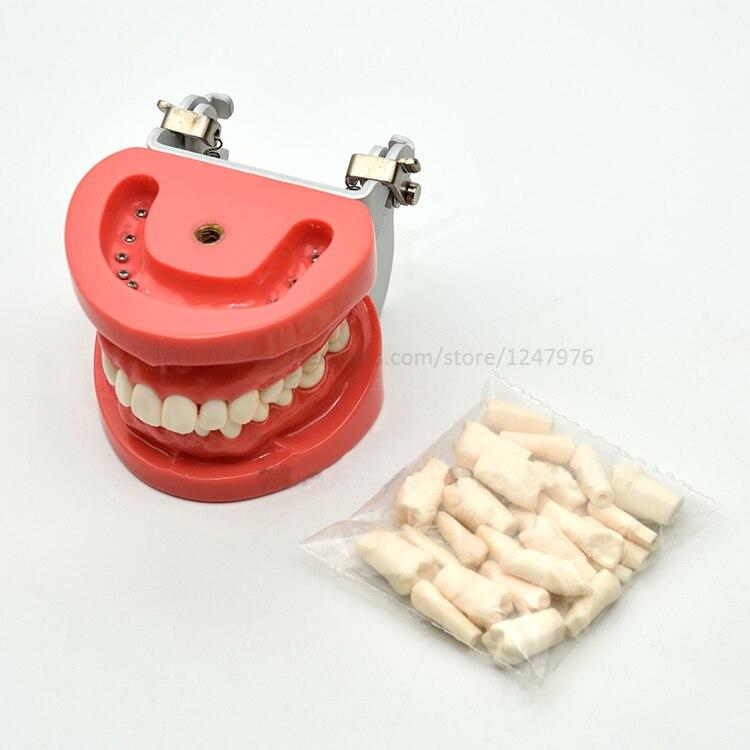 Стоматологическая Съемная Стоматологическая Модель Стоматологическая зубная композиция практическая модель с винтовой обучающей модели... - 2