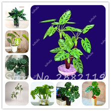 Seeds Tree Palm Promotion-Shop for Promotional Seeds Tree