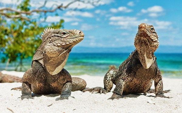 2016 Living room home decoration fabric poster animals beach lizards reptile