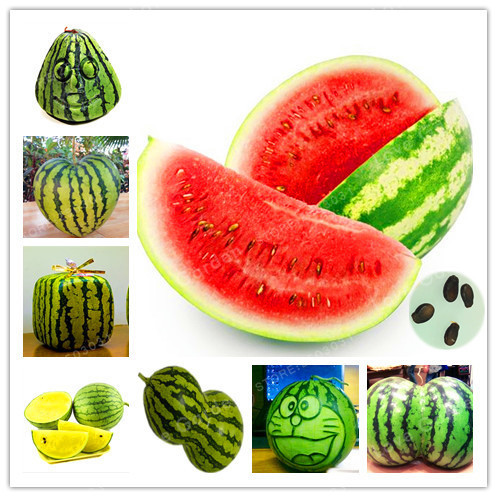 Rare Watermelon bonsai Very Sweet  30Pcs/Bag Variation Fruit plant Water Melon plant For Home Garden Easy-Growing