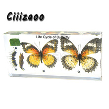 Life Cycle of Butterfly specimen  paperweight Taxidermy Collection embedded In Clear Lucite Block Embedding Specimen