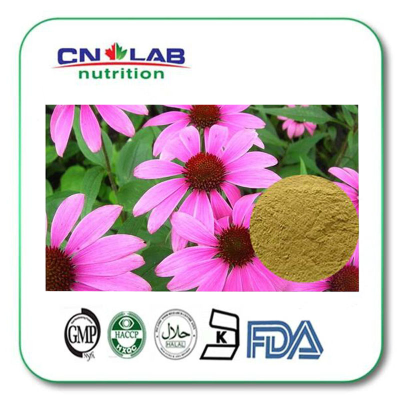 1000g GMP factory 100% Healthcare product echinacea 2% Cichoric Acid Echinacea Purpurea Extract Manufacturer with Polyphenol hot product nettle leaf extract 2% silicic acid
