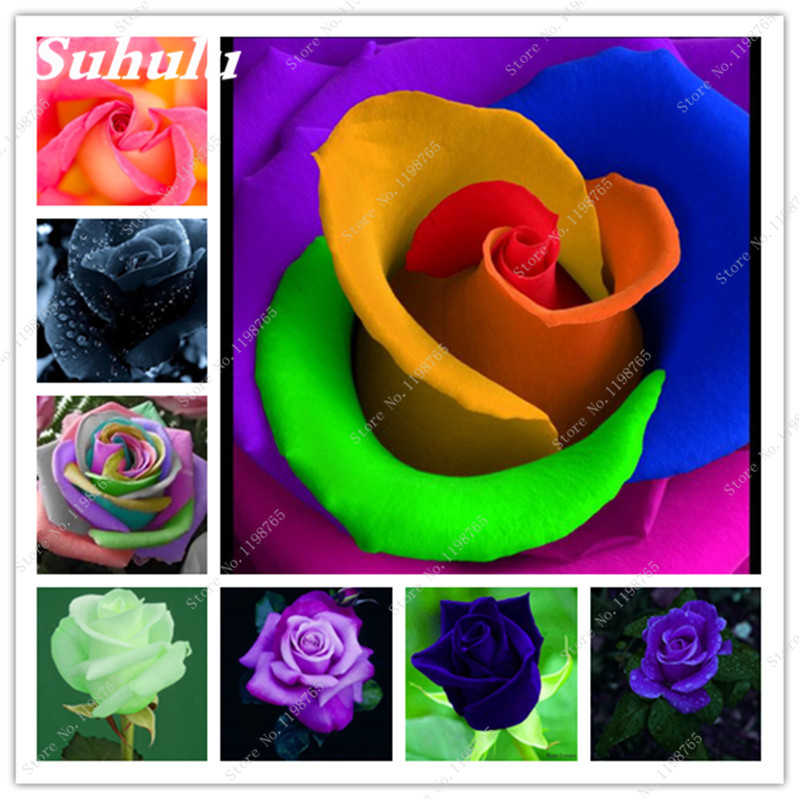 Free Shipping 200 Seeds/Bag Rare Holland Rainbow Rose Seeds Mixed Flower Home Garden Rare Color Rose Flower Seeds For Garden