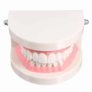 Image 3 - Pro Dental Studie Lehre Weiß Zähne Modell Standard Karies Zahn Pflege Oral Medizinische Bildung Zahnarzt Ausrüstung Mundpflege Werkzeug