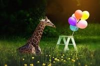 Animal Giraffe balloon green grass flower photography backgrounds Computer print children kids photo backdrop