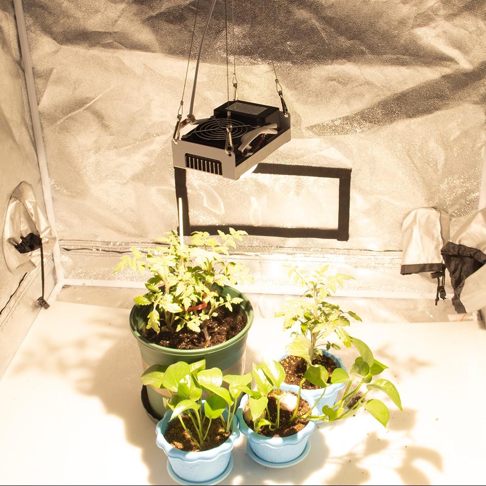 Citizen invernaderos crece hidropónico 17