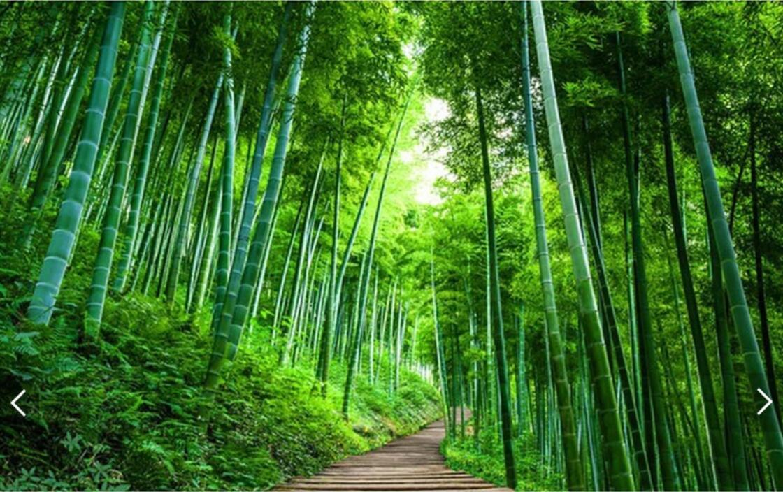 3D Bambu Brove Mural Alam Hijau Hutan Pohon Foto Wallpaper HD Dinding Cetak Kertas Roll untuk