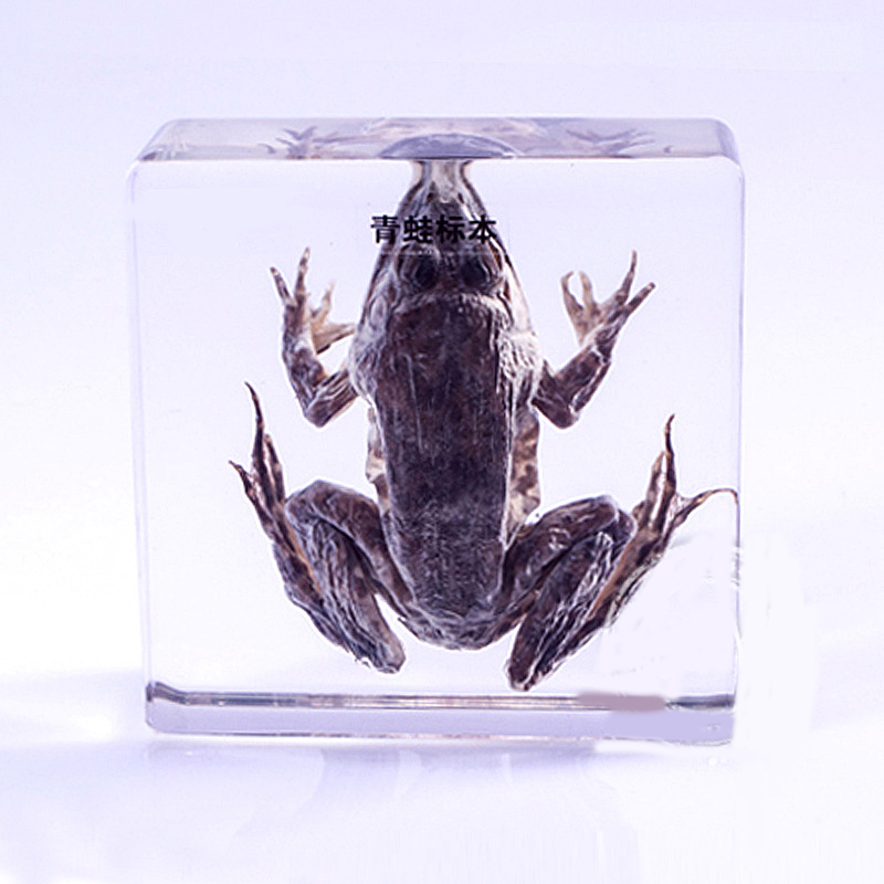 Real Toad Specimens In Clear Lucite Block educational Instrument Middle school biology School teaching aids Teaching instrument fishbone fispecimens in clear lucite block educational instrument middle school biology school teaching aids