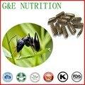 500 mg x 500 pcs Natural Preto ant/Tttyruei Cápsula com frete grátis
