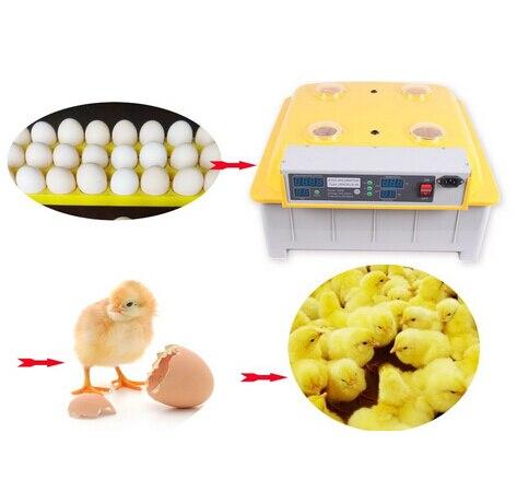 Инкубация в инкубаторе на 48 яиц