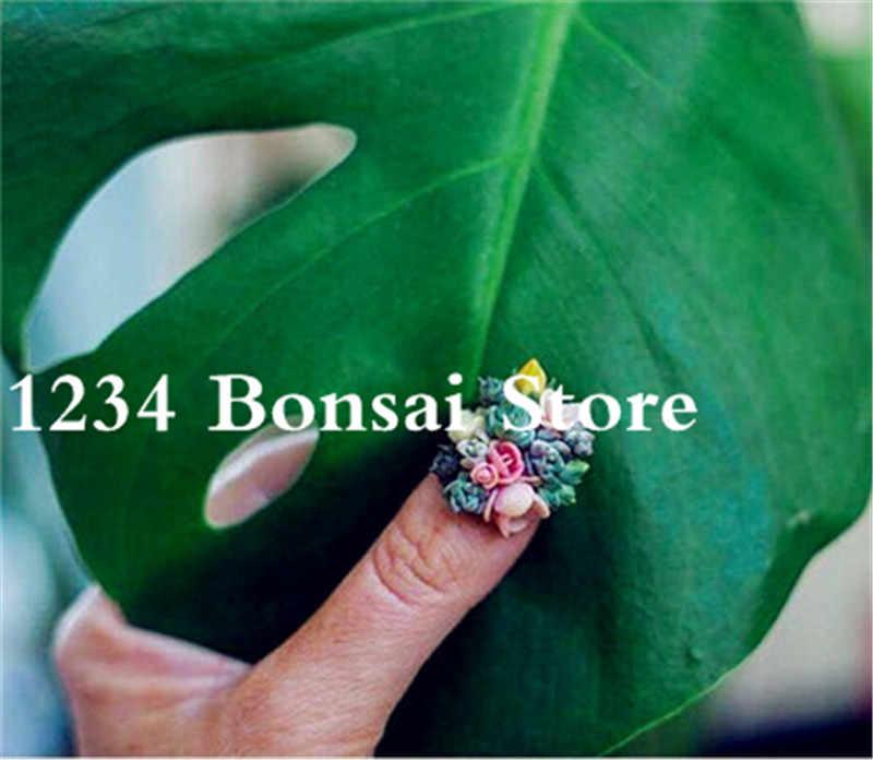 הגעה חדשה 2018! 100 יחידות לערבב lithops צמחי נדיר עסיסי Plantas התחת פרח בונסאי בpseudotruncatella סלון אבן מיני בונסאי