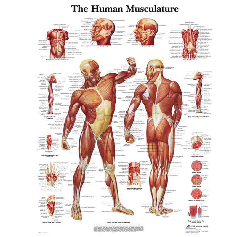 Анатомия человека мускулы системы художественный плакат печать тела карта холст настенные картинки для медицинского образования домашний декор