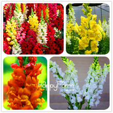 Loss Promotion! 100 Seeds/Pack Multi color optional Snapdragon Seeds Bonsai Balcony Flower Potted Seeds DIY Home Garden
