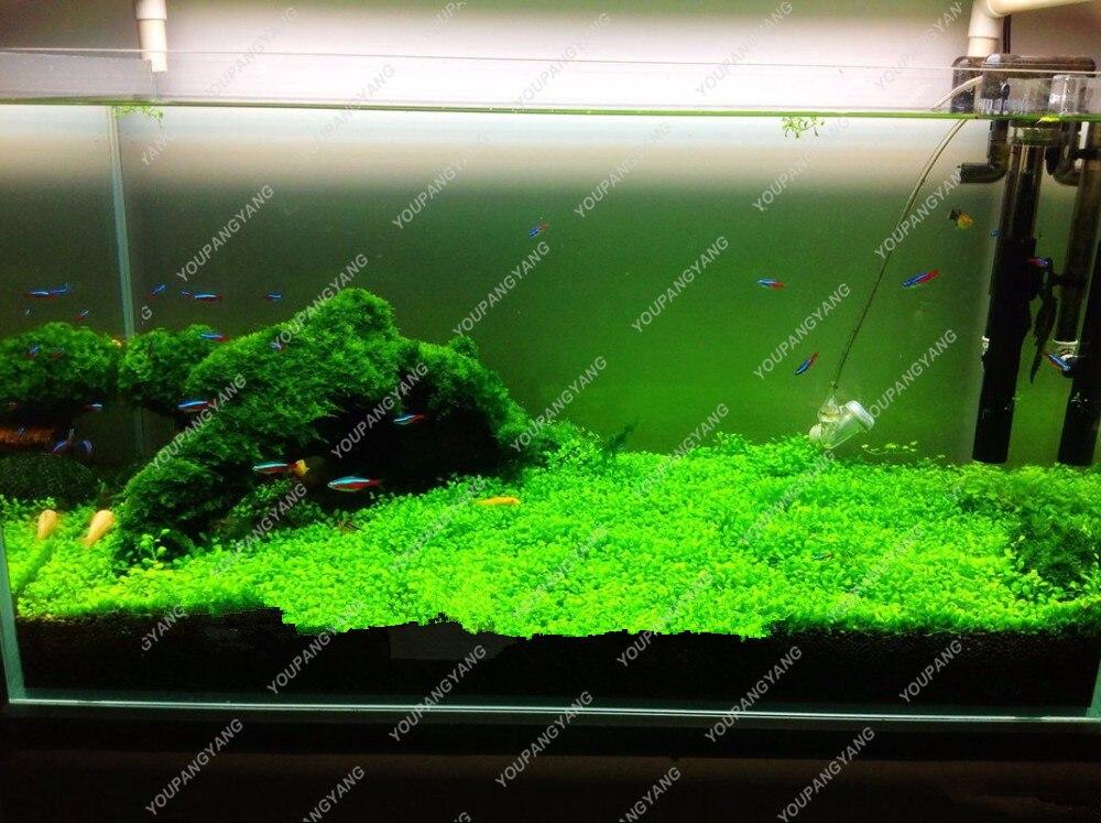aquarium samen
