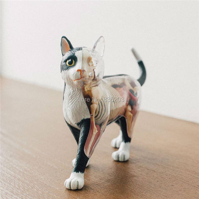 Tienda Online 4d Master visionthe disecado gato anatomía modelo ...