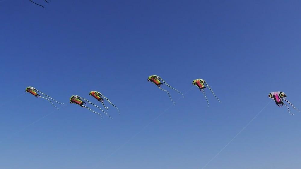Livraison gratuite nouvelle conception 7sqm trilobites doux cerfs-volants ligne ripstop nylon tissu cerf-volant weifang cerfs-volants usine poulpe méduses - 3
