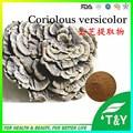 Venda quente! melhor venda Coriolus Versicolor mushroom Extract 20:1/Coriolus Versicolor 500 g/lote