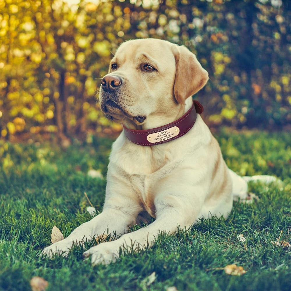 HTB1tBDRf3HqK1RjSZFPq6AwapXab - Halsband hond met naam en telefoonnummer en/of volledig adres leer
