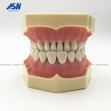 Good quality Dental Soft Gum Teeth Model with tougneTypodont w/ 32 Removable Teeth NISSIN 200 Compatible