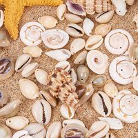 Over 150Pcs Mixed Natural Beige ​Cowrie Sea Shells Conch Beads Jewelry Making