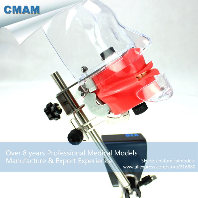 CMAM-DENTAL02-1 Dental Phantom Head Simulator for Oral Study, Medical Science Educational Dental Teaching Models  цена