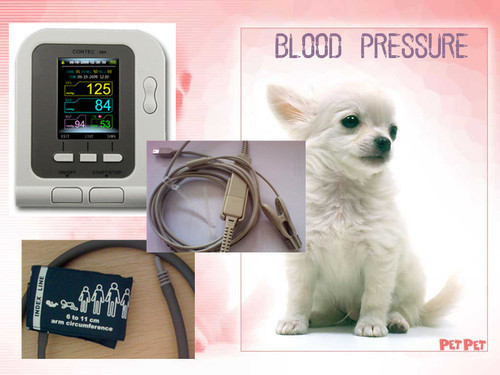Veterinary Digital Blood Pressure Monitor, VET HR / NIBP Monitor, Vet BP Monitor, Contec 08A, Free shipping free shipping contec08c with adult spo2 sensor vet blood pressure monitor sphygmomanometer digital automatic nibp