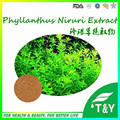 pure natural Phyllanthus niruri extract powder 5:1 10:1 20:1 300g/lot free shipping