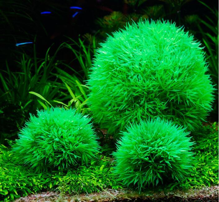 biorb fish tank aquarium natural decoration Simulation landscaping of grass-ball fish tank Plastic grass artificial flower