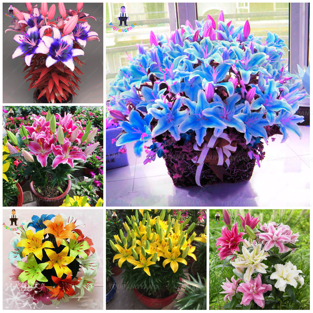 Aliexpress Buy Lily Bonsai Plants Yellow White Red Pink Purple