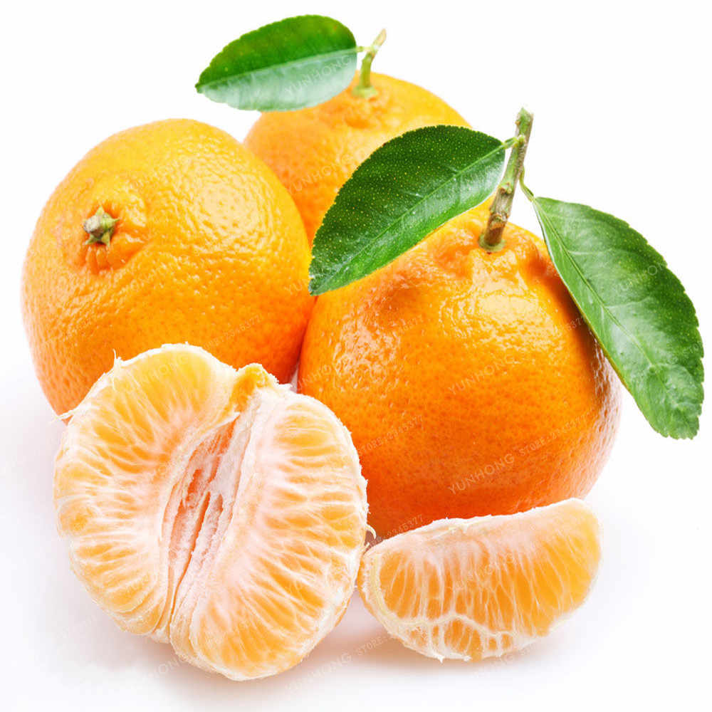 Mandarin Orange Bonsai Dimakan Buah Pohon Bonsai Jeruk Bonsai Bonsai Makanan Sehat Taman Rumah Mudah untuk Tumbuh 30 Pcs