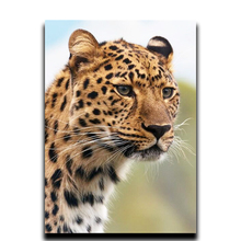 Diy painting Diamond cross stitch of animals 3d Square or Round diamond mosaic embroidered Full of Leopard Snow Diamonds painting 3d round cross stitch square diamond mosaic full of diamonds embroidered with diamonds beauty warrior