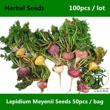 Very Popular Root Vegetable Lepidium Meyenii Seeds 100pcs, Medicinal Herb Peruvian Ginseng Seeds, Herbaceous Biennial Maca Seeds