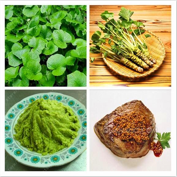 100 pcs Wasabi Seeds, Japanese Horseradish Seed Vegetable Seeds Bonsai Plant DIY Home Garden mustard plant seeds