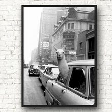 Llama in a New York City taxi Wall Art Canvas Painting Nordic Posters And Prints Animal Wall Pictures For Living Room Home Decor(China)