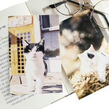 6pack/lot Lovely Cat forest postcards group greeting card gift cards office school Mailable Card Wholesale