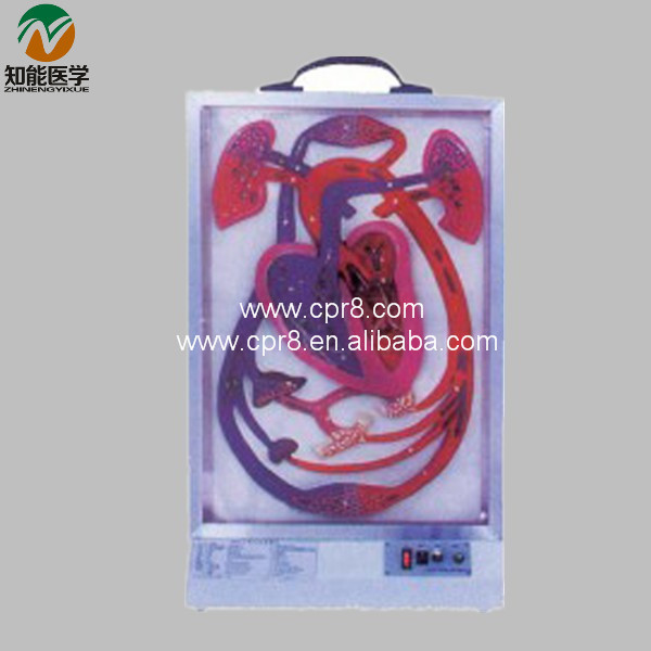 BIX-A1078 Electric Heart Beat And Blood Circulation Model   MQ210 bix a1079 electric portal collateral circulation model g156