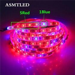 5050 Светодиодный светильник для выращивания растений 50 см 1 м 2 м 3 м 4 м 5 м водонепроницаемый DC12V Красный Синий 3:1, 4:1, 5:1, для теплицы для гидропо...