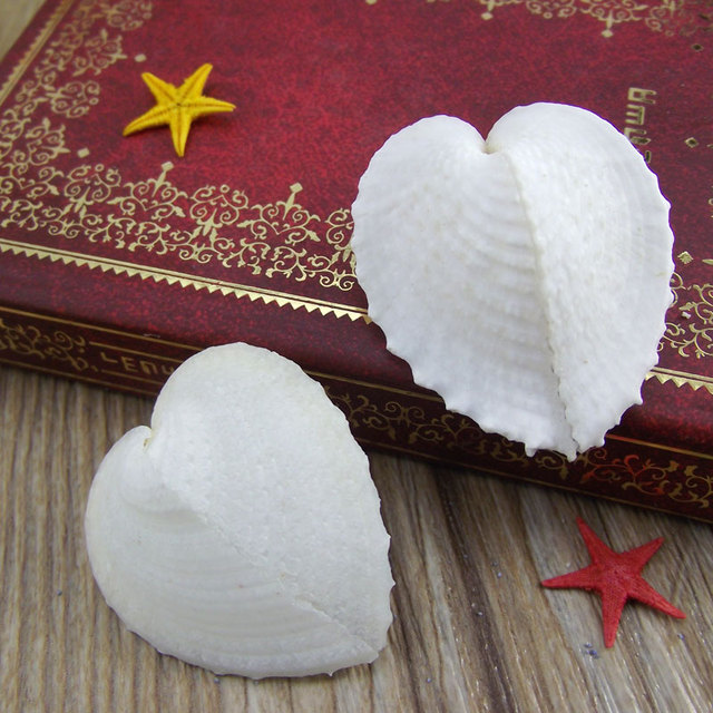 The heart clam shells, conch Heart-shaped shell Love bei heart cockle tank platform wedding gift natural specimens