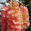 Sementes de flores Delphinium Sementes bonitas Sementes Da Planta Da Flor para casa jardim planta flor AA