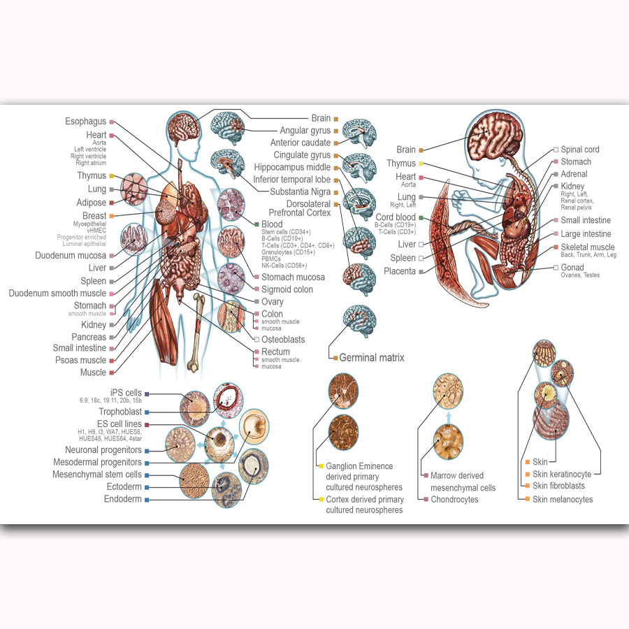 Mq1889 Human Anatomy System Body Map Chart Health Hot New Art Poster