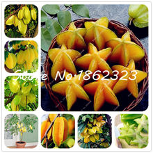 100 pcs Imported Carambola Bonsai Star Fruit Tree Shrub Organic Fruit Edible Starfruit for Home Garden Flower Pot Planters(China)
