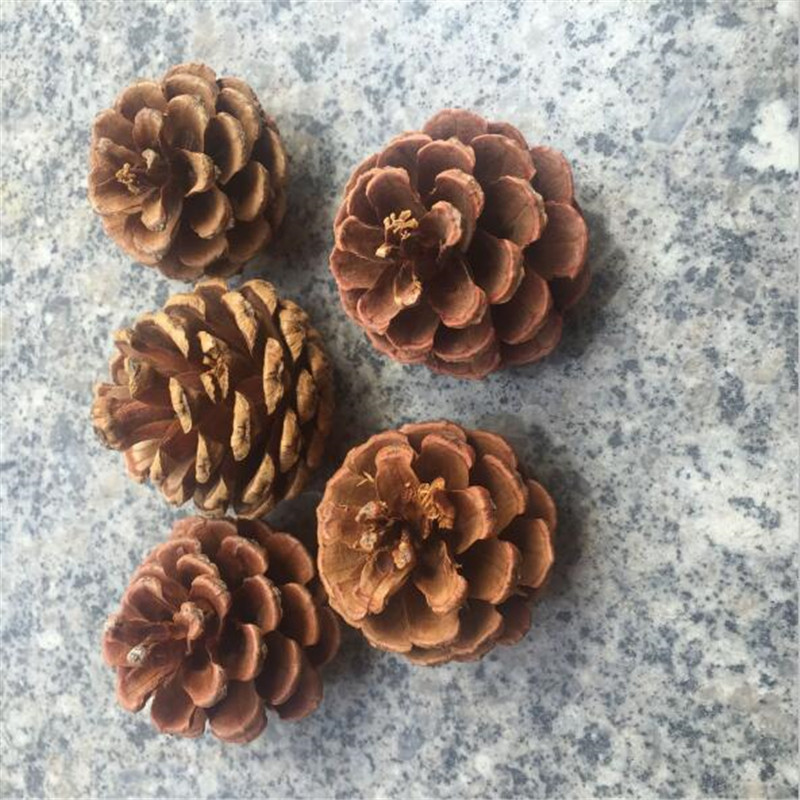 10pcs Christmas Decoration Pine Cones Pinecone Xmas New Year Holiday Party Decoration Ornament For Home Supplies