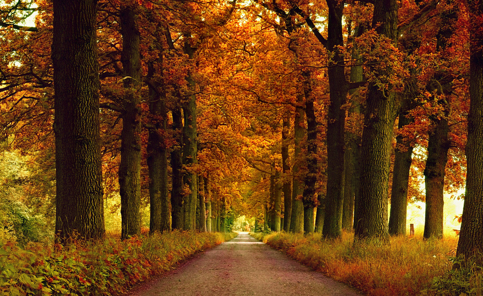 Beautiful Fall Scenery Wallpapers Golden Fall Scenery Maple Trees Forest Road Cross Stitch