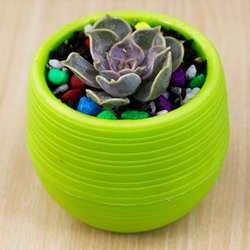 7*7 см оптовые цветочные горшки мини горшки цветочные для сада из небьющегося пластика кассеты для рассады для сочных горшок для цветов