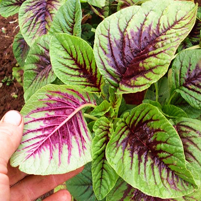 Amazon Organic Plant Food
