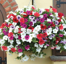 10kind different mixed 100 seeds Hanging petunia flower for home plant and pot planters