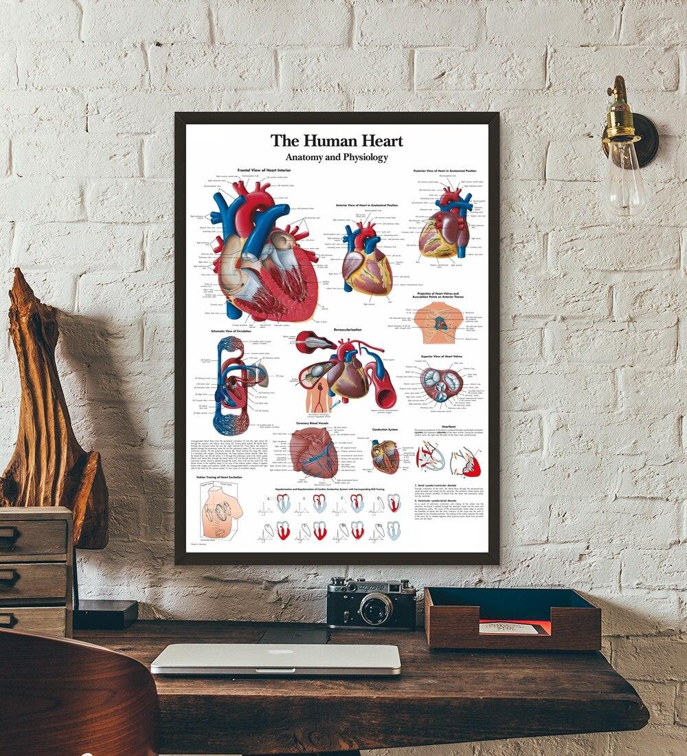 The Human Heart Anatomical Chart Anatomy Medical Wall Art Canvas ...